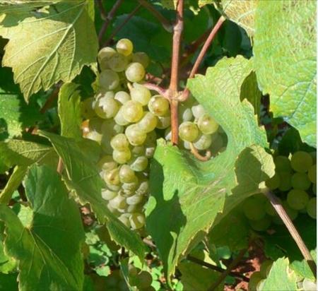 Imagen para la categoría Vinos y Cavas